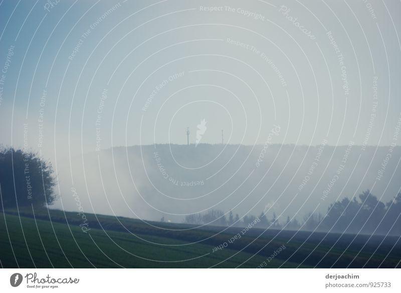 Morgenstund ruhig Freude Wald Umwelt Herbst Bewegung Wiese natürlich außergewöhnlich Deutschland Nebel wandern laufen Klima Ausflug genießen
