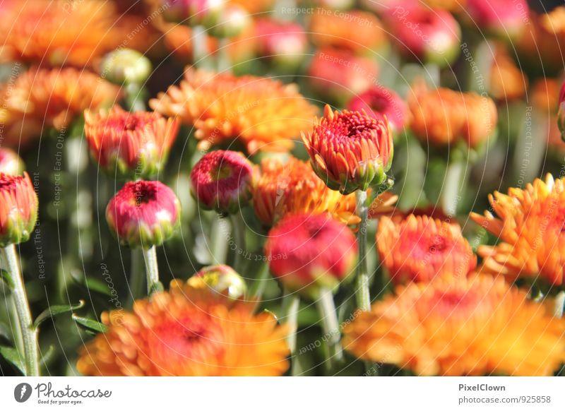 Blümchen Pflanze schön grün Farbe Blume Blatt Gefühle Wiese Gras Blüte Glück Garten Stimmung Park orange ästhetisch