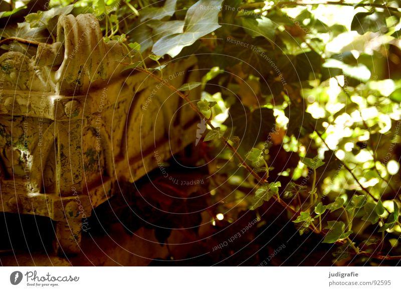 Heilstättenromantik Pflanze Efeu grün Kübel Terrasse Licht Romantik Schmuck Idylle schön zart Gegenlicht Ranke Wachstum verfallen Vergänglichkeit Garten Park