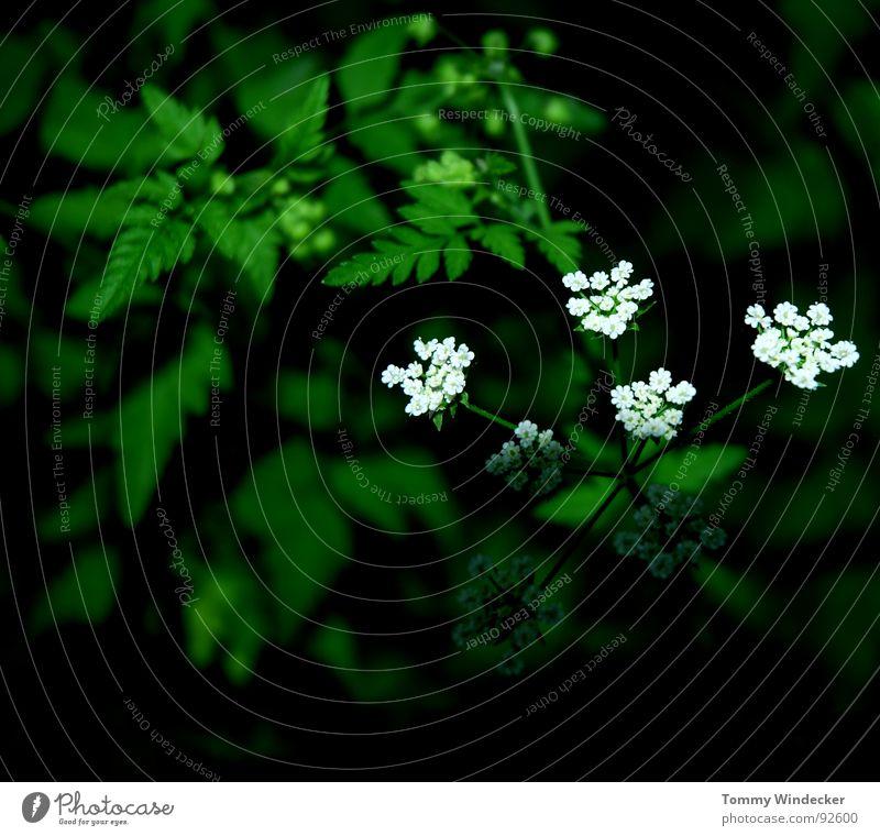 Licht und Schatten Natur Pflanze grün Farbe Sommer Blume Landschaft Wärme Frühling Garten Wachstum leuchten frisch nass weich Jahreszeiten