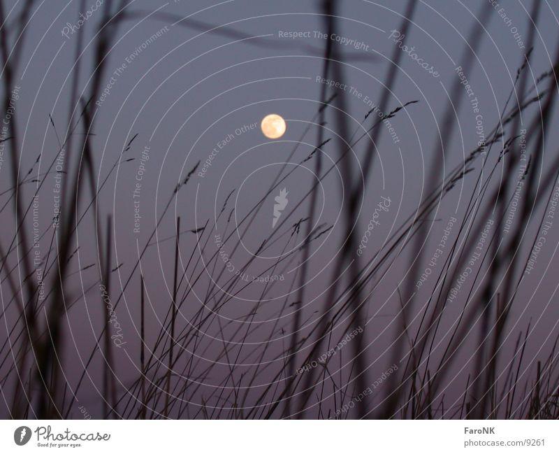 Mond Vollmond Gras Himmelskörper & Weltall