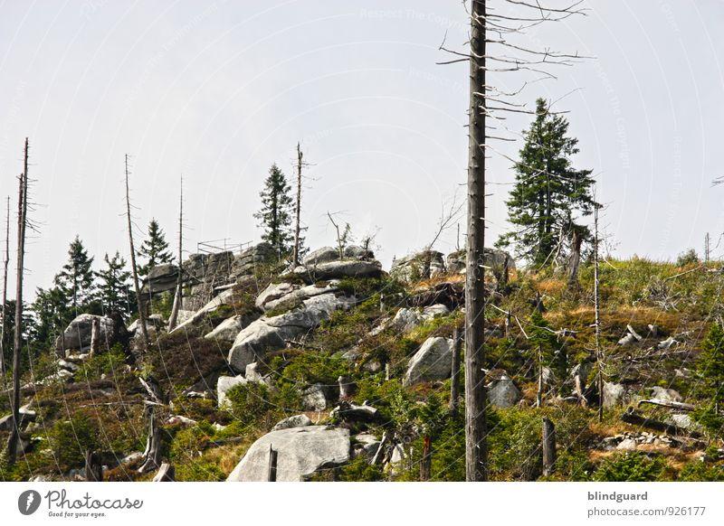 Vom Leben, dem Tod und den Steinen Himmel Natur Ferien & Urlaub & Reisen Pflanze Baum Landschaft Ferne Wald Berge u. Gebirge Umwelt natürlich Felsen Tourismus