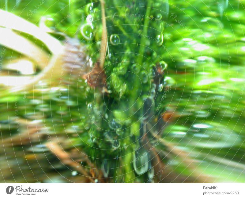 MoosGrün grün Vase Makroaufnahme Nahaufnahme Wasser Glas