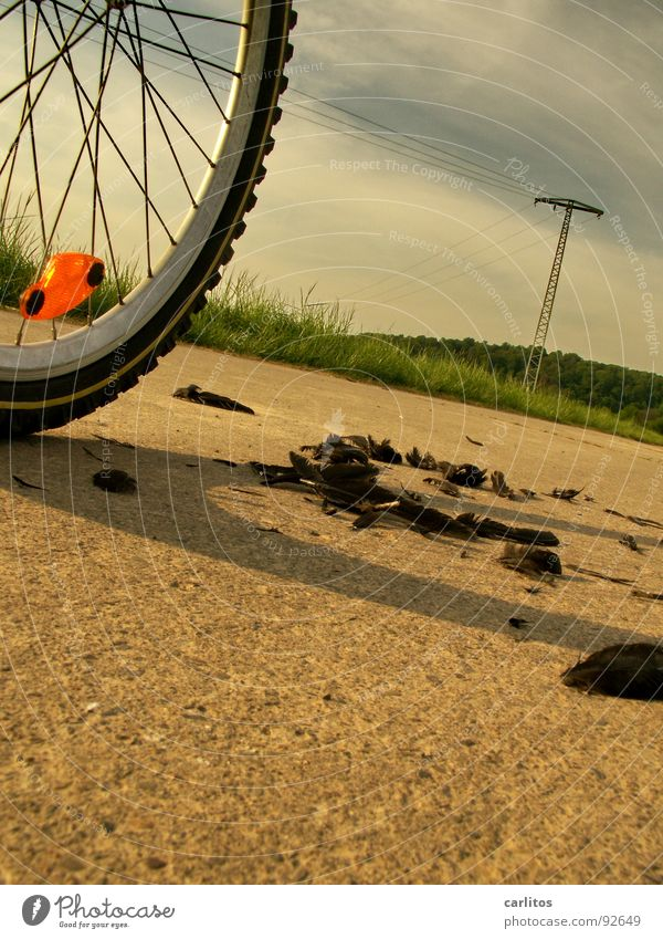 AUS DEM WEG !!! Unfall Fahrrad Silhouette Reflektor Vogel Vorfahrt Protokoll gehen Klage Freizeit & Hobby Profil Feder Federn lassen ich kam von rechts