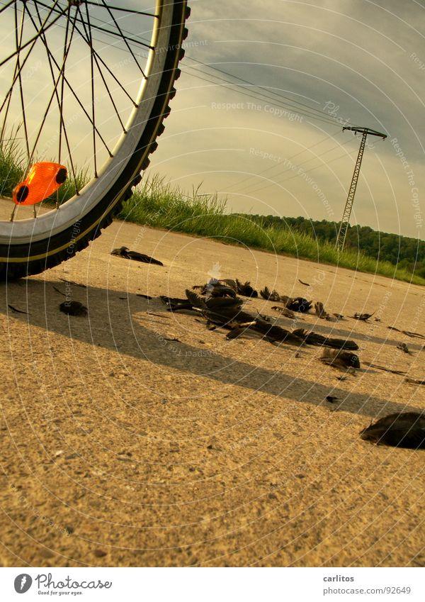 AUS DEM WEG !!! Vogel gehen Fahrrad Freizeit & Hobby Feder Unfall Versicherung Schriftstück Klage Reflektor Vorfahrt Protokoll