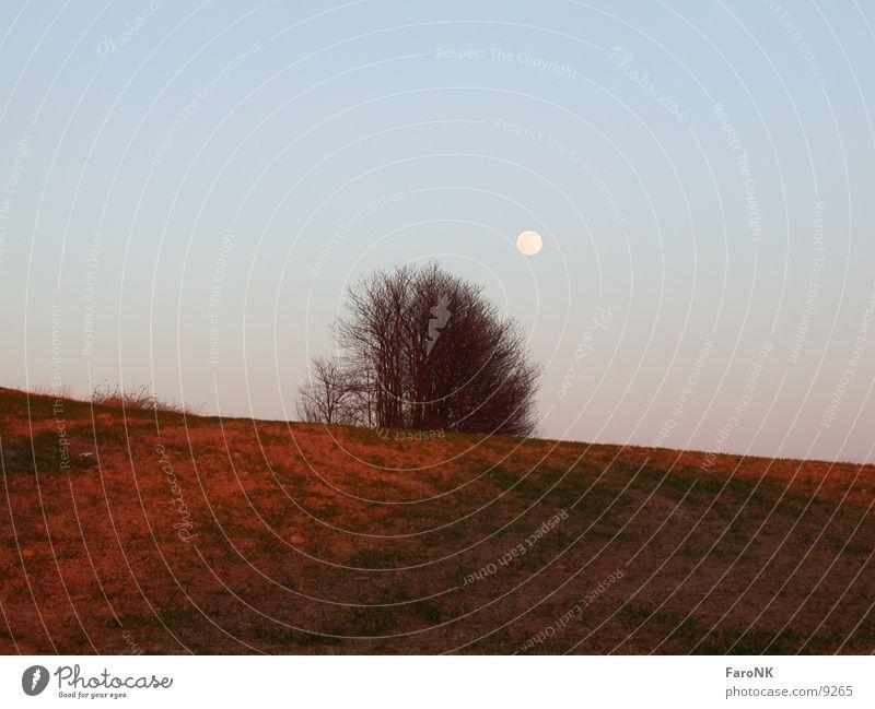 Rote Erde Himmel Baum Feld Mond