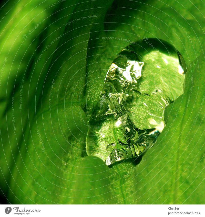 Kristalltropfen Wasser grün Blatt Frühling Regen Wetter nass Wassertropfen Mohn feucht durchsichtig Kristallstrukturen Garten Naturgarten