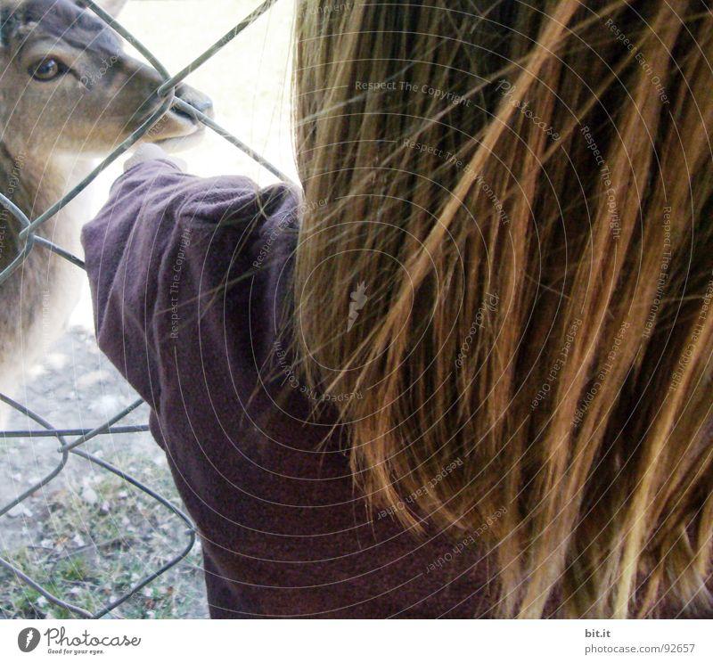 REH-RÜCKEN Kind Natur Tier Auge Haare & Frisuren Kopf Freundschaft Park braun Wind Rücken Ausflug berühren Frieden Vertrauen zart