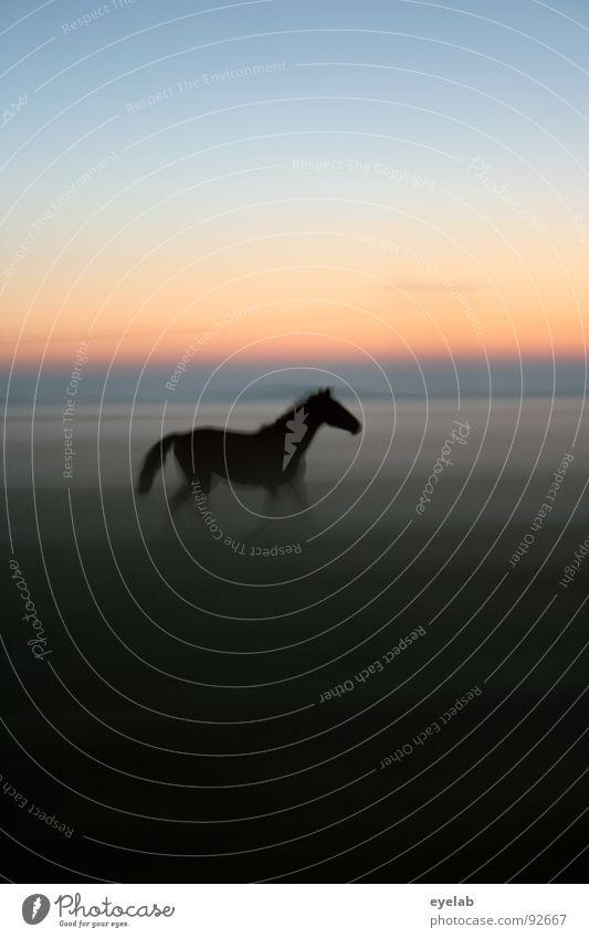 Der David Hamilton der Pferdefotographie :) Himmel grün Sommer Sonne Einsamkeit schwarz Wiese Bewegung Gras Freiheit Stimmung Horizont Wetter Nebel laufen Schönes Wetter