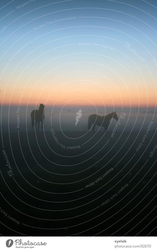 Zärtliche (Pferde-) Cousinen Himmel grün Sommer Sonne Einsamkeit schwarz Wiese Bewegung Gras Freiheit Stimmung Horizont Wetter Nebel laufen Schönes Wetter