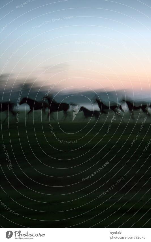 Schwamm drüber (..und du hast ´nen ähnlichen Effekt !) Himmel grün Sommer Sonne Einsamkeit Tier schwarz Tierjunges Wiese Bewegung Gras Freiheit Stimmung