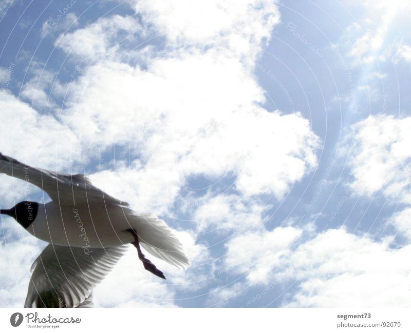 Known Flying Object Möwe Sommer Wolken Lachmöwe Vogel Feder Sonne Himmel fliegen Luftverkehr blau Flügel