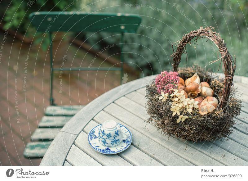 PflanzZeit [TulpenZwiebeln III] Herbst Garten verblüht authentisch Zufriedenheit Lebensfreude Beginn Vergänglichkeit Stillleben Holztisch Korb Tasse Gartenstuhl