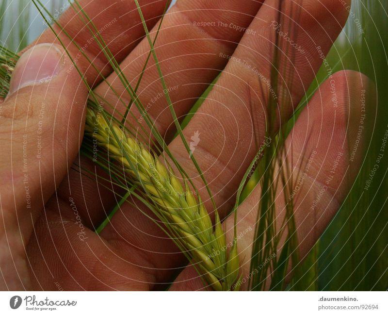 Oh Bauer... Hand Finger Aussaat Feld Streifen berühren Fingernagel Landwirt Gerste Weizen Ernährung Arbeit & Erwerbstätigkeit Vertrauen Getreide Wind Gefühle