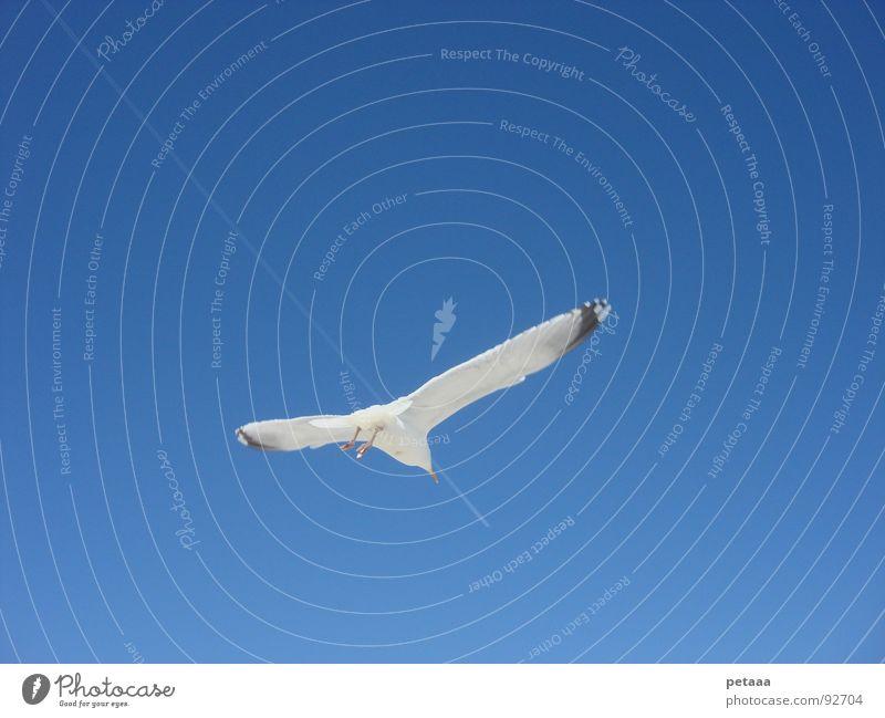 Verfolgungsjagd Möwe Kondensstreifen Vogel Himmel blau Luftverkehr Verfolgungsrennen
