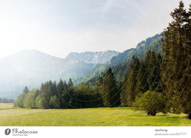 don't wake me up Umwelt Natur Landschaft Himmel Frühling Sommer Schönes Wetter Wiese Wald Felsen Alpen Berge u. Gebirge Duft authentisch fantastisch frei