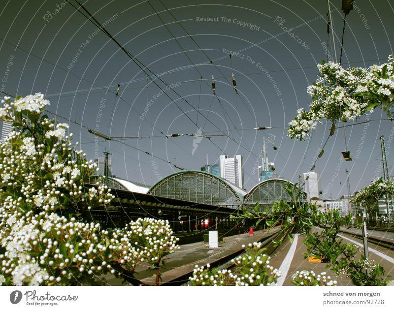 3.4 Frankfurt am Main Blume Baum Hochhaus Bahnhof Himmel Blühend Kontrast blau