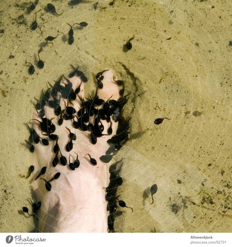 Angriff der Killerquappen Natur Wasser Strand Fuß See Sand Macht Wut Frosch Ärger Zehen Angriff Nachkommen Schwarm Unke Kaulquappe