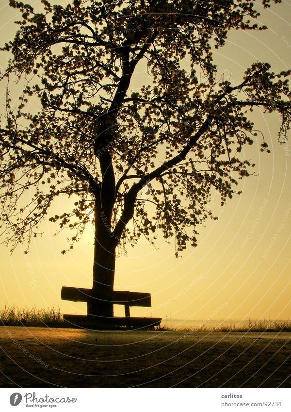Wochenende ohne Sonne Baum Blatt Wolken Blüte Stimmung Freizeit & Hobby Ausflug Spaziergang Bank Ruhestand Blattknospe Sauerstoff Blattgrün Photosynthese