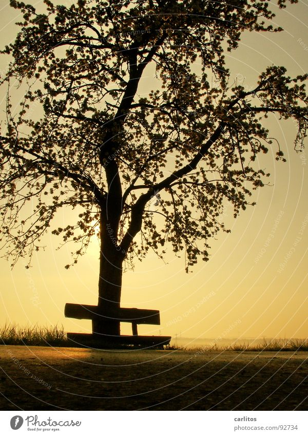 Wochenende ohne Sonne Baum Blatt Wolken Blüte Stimmung Freizeit & Hobby Ausflug Spaziergang Bank Ruhestand Blattknospe Sauerstoff Blattgrün Photosynthese Obstbaum Lotterie