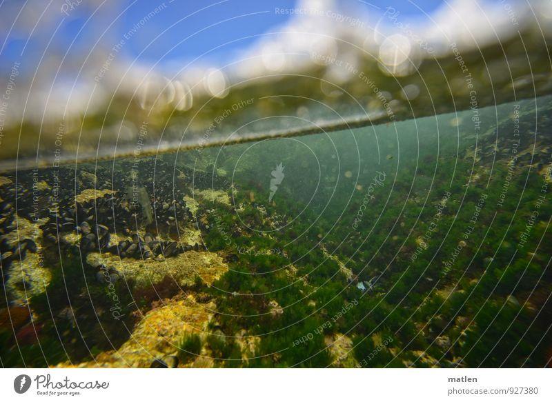 Talblick Pflanze Sand Wasser Wolkenloser Himmel Sonnenlicht Sommer Wetter Schönes Wetter Felsen Schlucht Küste Meer Muschel Tiergruppe blau gelb grün Welle