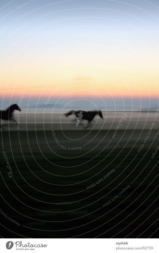 Fang mich, Bilitis ! Himmel grün Sommer Sonne Einsamkeit Tier schwarz Tierjunges Wiese Bewegung Gras Freiheit Stimmung Horizont Wetter Nebel