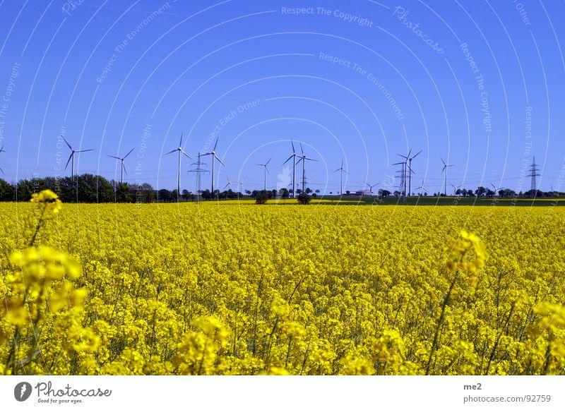raps im mai Natur Sommer Freude Landschaft Windkraftanlage Blauer Himmel Erneuerbare Energie Rapsfeld Kreis Paderborn