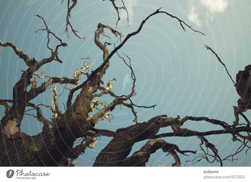 Der sterbende Baum Umwelt Natur Himmel Pflanze Eiche Park Wald alt dehydrieren Wachstum gigantisch groß Krankheit natürlich standhaft Tod Endzeitstimmung Trauer
