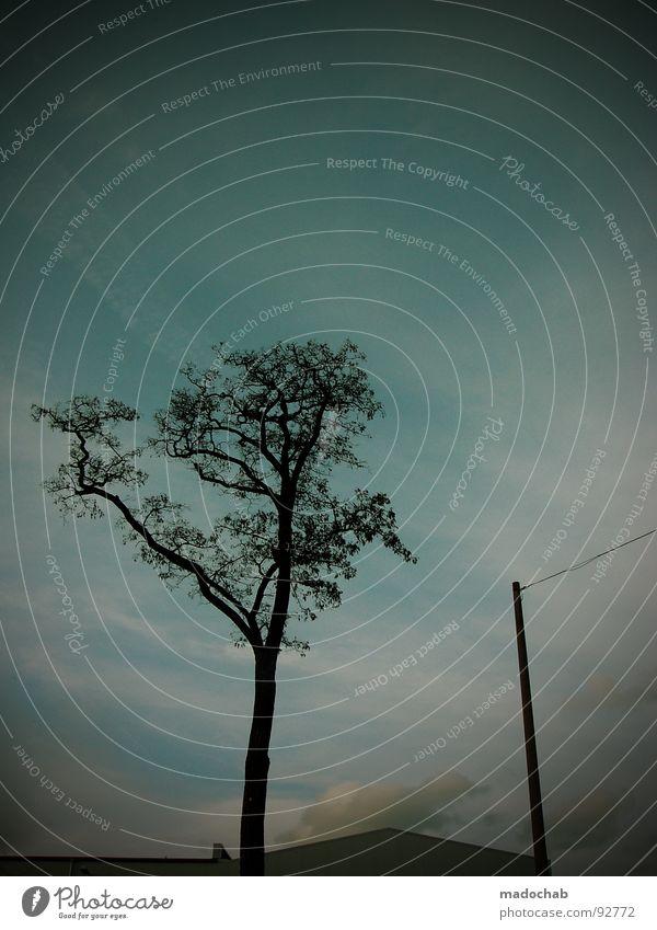 SONNTAG MORGEN Baum Lampe Silhouette Gegenlicht Abend Himmel Horizont Trauer Verzweiflung tree Zweig brenches silhouettes evening Idylle kitschwolken clouds sky