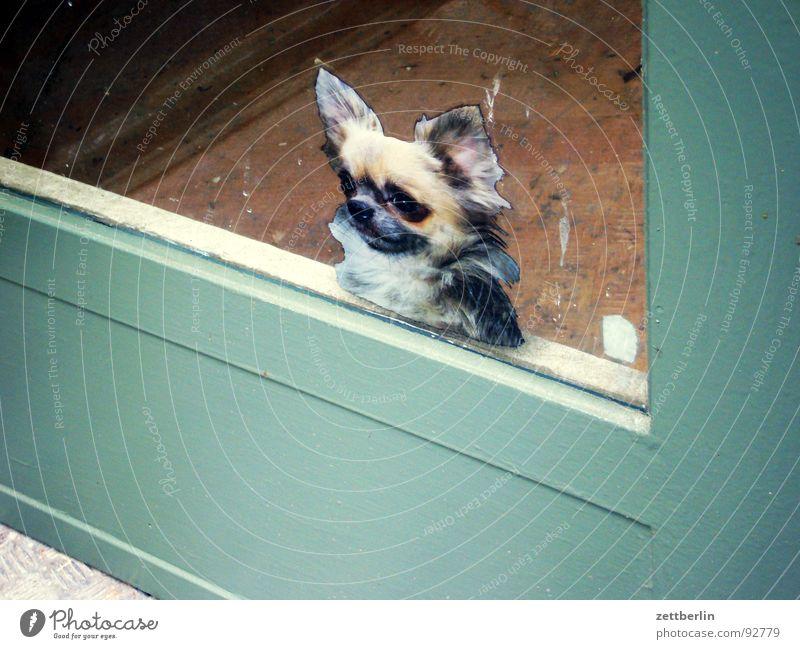Hund Tür Sicherheit Dekoration & Verzierung obskur Eingang Etikett Ausgang Dogge Jagdhund Biest Haushund Glastür Polizeihund