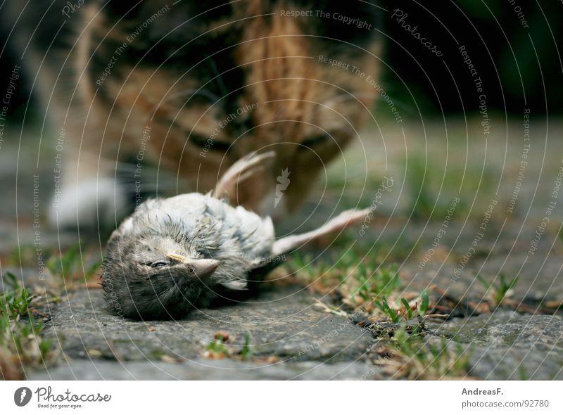FastFood Leben kalt Tod Katze Vogel Feder fangen Jagd Fressen Schnabel töten Hauskatze Spatz Landraubtier