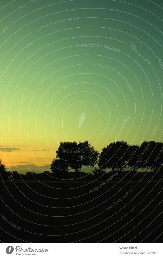 Und dann die Dämmerung. Licht zyan gelb Sonnenuntergang Baum Gegenlicht schwarz Feld Wolken Nacht Deutschland Himmel dämmern Abend Silhouette Kontrast