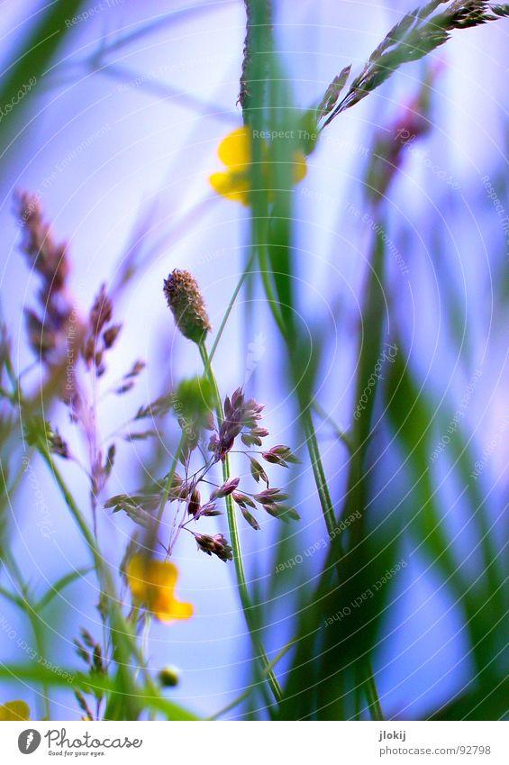 H...H...Ha...Haaaa...Haaaaaa...Haaaaaaaaaaaaaa....tschi Himmel Natur blau grün Pflanze Sonne Wiese Gras Bewegung Frühling Lampe Wind Feld glänzend Wachstum violett