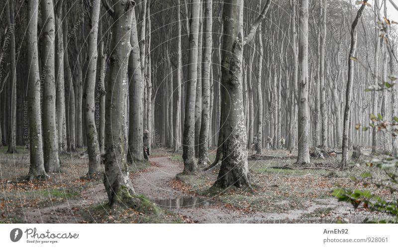 Gespersterwald Nienhagen II Umwelt Landschaft Pflanze Erde Wasser Herbst schlechtes Wetter Nebel Baum Wald dunkel gruselig kalt Einsamkeit Farbfoto