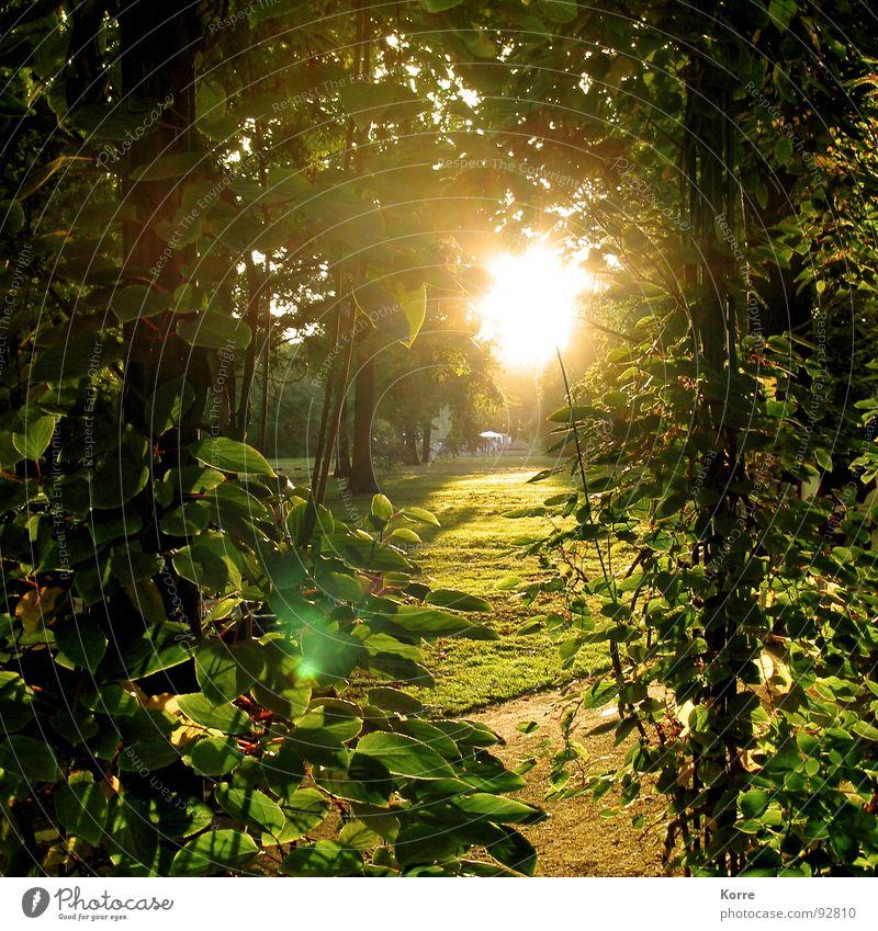 Schön. Farbfoto Außenaufnahme Menschenleer Abend Licht Sonnenlicht Sonnenaufgang Sonnenuntergang Gegenlicht Leben harmonisch Zufriedenheit ruhig Garten