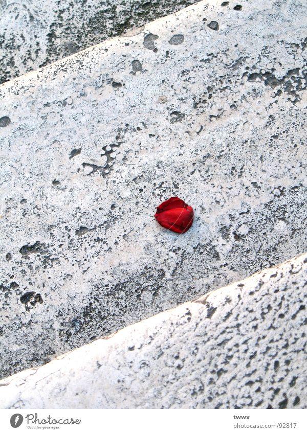 Liebe Blüte... rot Traurigkeit Stein Treppe trist Romantik Rose Vergänglichkeit Loch Duft Surrealismus Blütenblatt welk Rest Valentinstag steinig