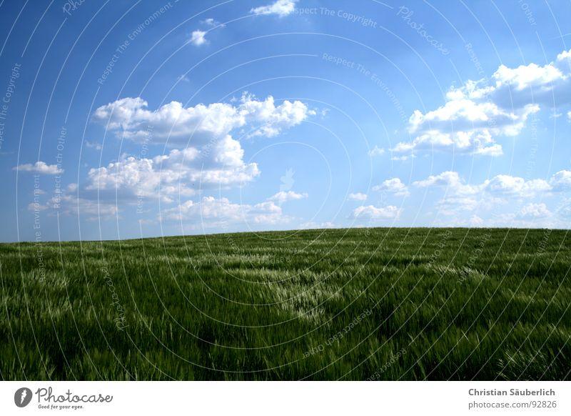 Ein Stück vom Himmel II Wolken Horizont Kornfeld glänzend Feld Landwirtschaft weiß grün Erholung Gerste Gerstenfeld Frühling blau friedlich Grönemeyer
