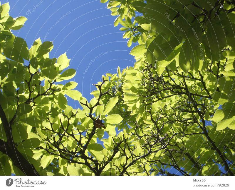 Blätterdach Himmel Baum Sommer Blatt Wärme Beleuchtung mehrere Dach Physik viele durchsichtig Schönes Wetter