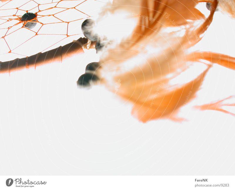 Traumfänger träumen Makroaufnahme Nahaufnahme Feder Kugel Detailaufnahme Farbfoto Menschenleer Netz geflochten Textfreiraum unten