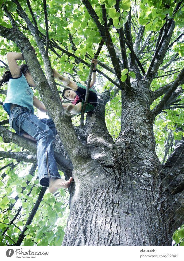 ich komme auch ... Kind Natur Mädchen Baum Freude Blatt Wald Junge Spielen oben hoch Aktion Klettern Begeisterung