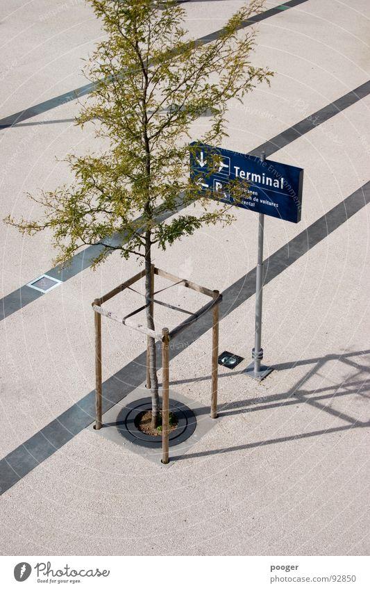 Terminal Tree blau grün Architektur grau Linie Platz Information Verkehrswege Flughafen Schaltpult