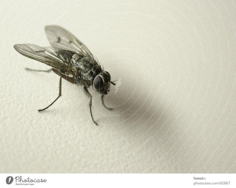 kooom komm komm ... Fliege Insekt Mahlzeit Angelköder