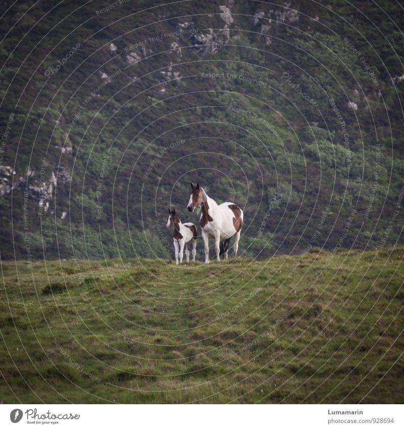 Generationswechsel Natur Landschaft Tier Wald Umwelt Tierjunges Berge u. Gebirge Wiese natürlich klein Zusammensein Familie & Verwandtschaft wild Wachstum
