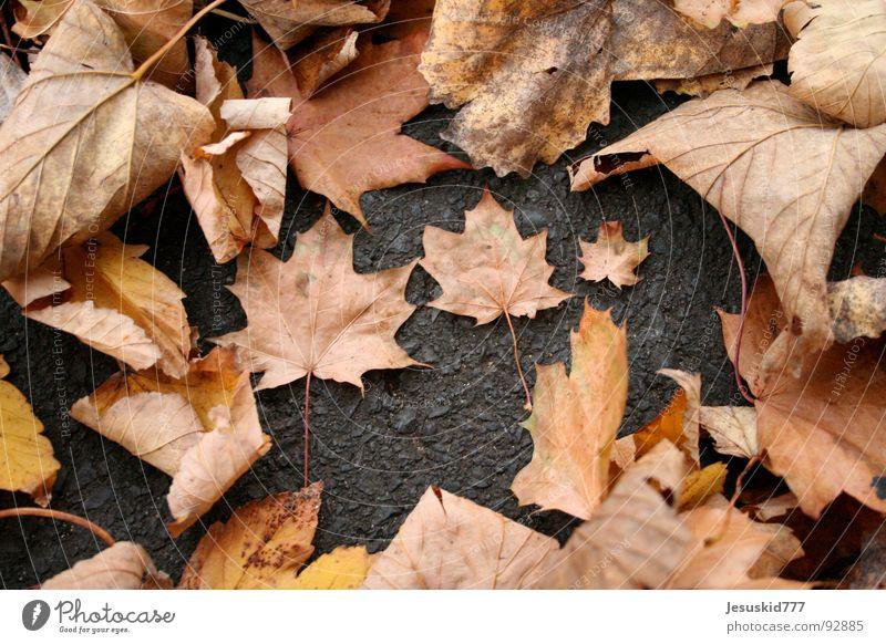 The Couple Blatt gelb Straße Herbst orange klein groß 3 Erde Platz liegen fallen Anordnung Haufen