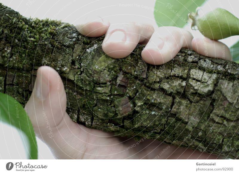 Natürlich Haut Mensch Hand Finger Baum Holz festhalten Fingernagel Baumrinde Griff umschließen Ast Zweig Farbfoto Gedeckte Farben Außenaufnahme Nahaufnahme