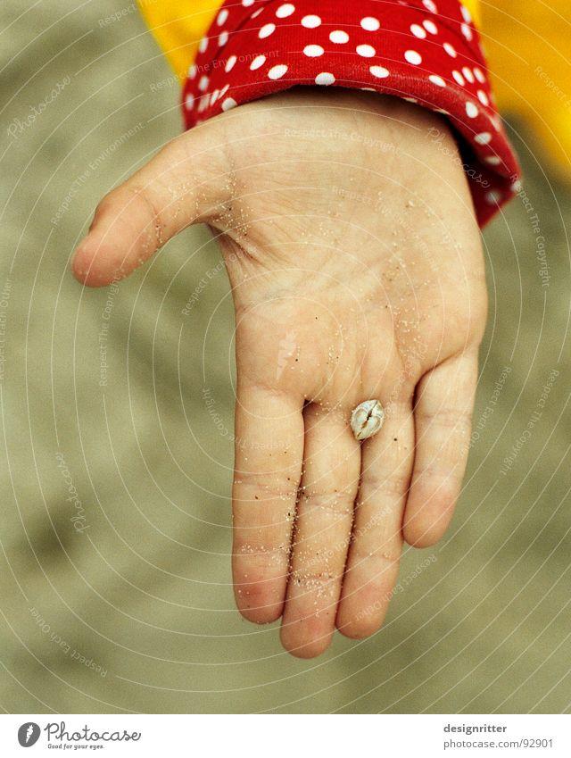 gefunden Hand rot Strand gelb Sand Ostsee Muschel Rügen Umhang