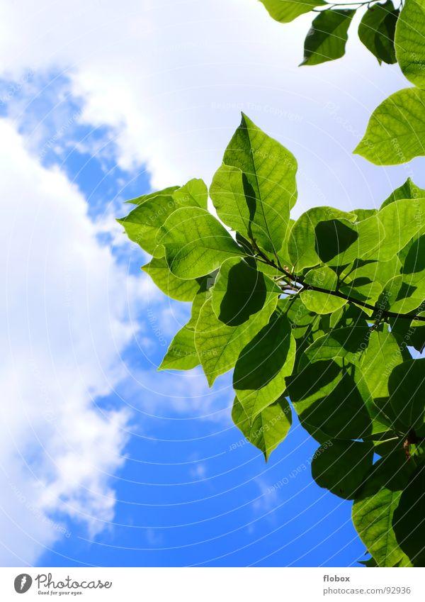 Summertime? Natur Himmel Baum Sonne grün blau Pflanze Sommer Blatt Wolken Leben springen Frühling Wärme Kraft Umwelt