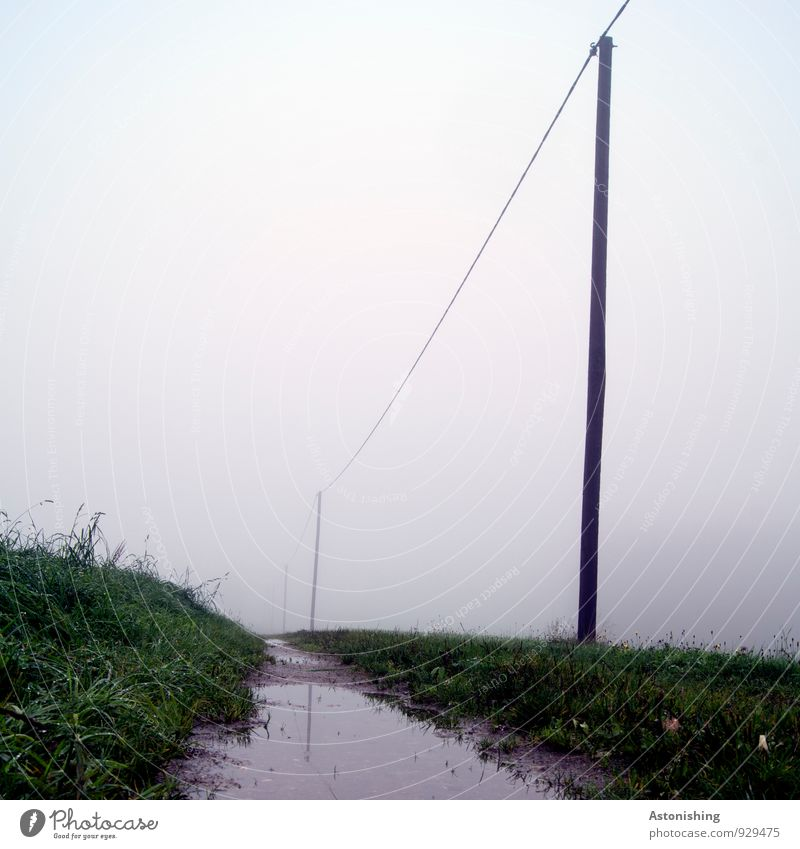 Wetter Umwelt Natur Landschaft Pflanze Luft Wasser Herbst schlechtes Wetter Nebel Gras Wiese Wege & Pfade stehen dunkel kalt grau grün trüb Pfütze Strommast