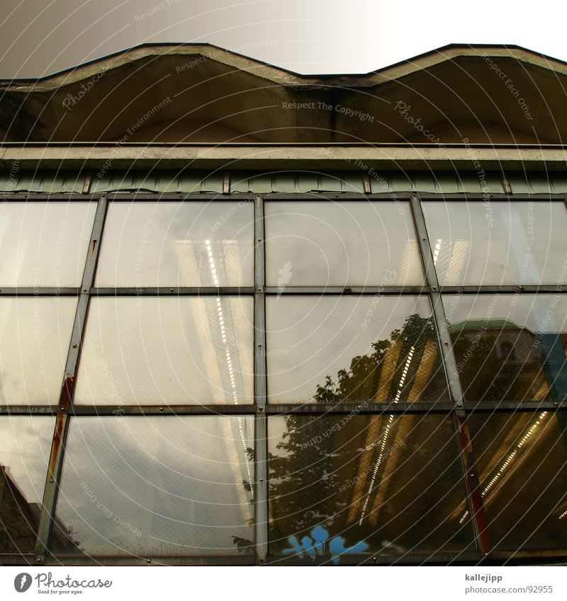 M Bildung Dach Fenster Tier Lehrer Gezwitscher singen Drossel Geschwader Angriff Krieg Flotte Jäger Osten Umwelt Schüler Volkshochschule Sporthalle Schulsport