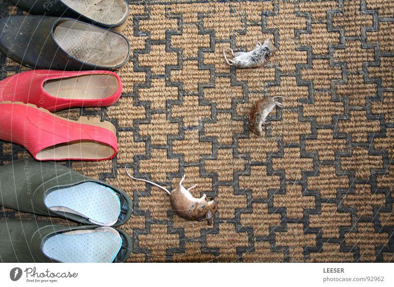 Katerfrühstück. Hauskatze Katzenpfote Fußmatte Hausschuhe Schuhe Tod Tier Fressen Souvenir Wachsamkeit Fell Säugetier Trauer Verzweiflung Vergänglichkeit Maus